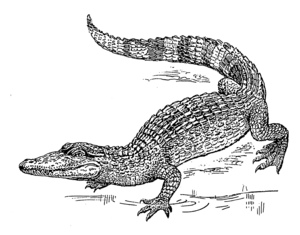 line art example of a Crocodile.